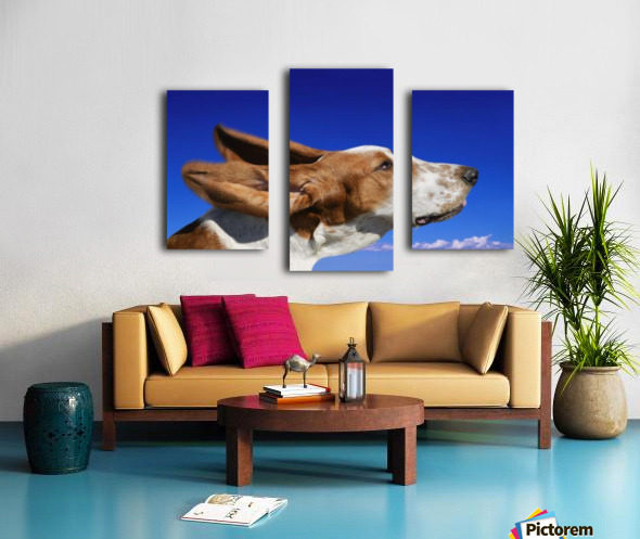 Dog With Ears In The Wind Canvas print