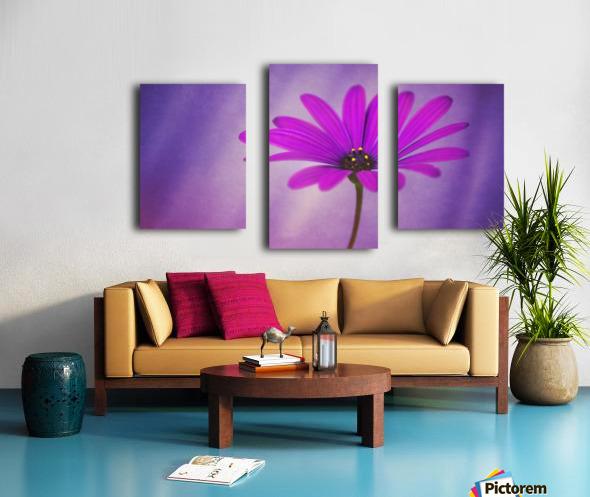 Purple Osteospermum Canvas print