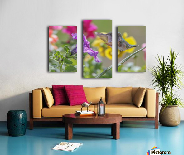Humming Bird Purple Flower Photo by Jason Andrew Smith Canvas print