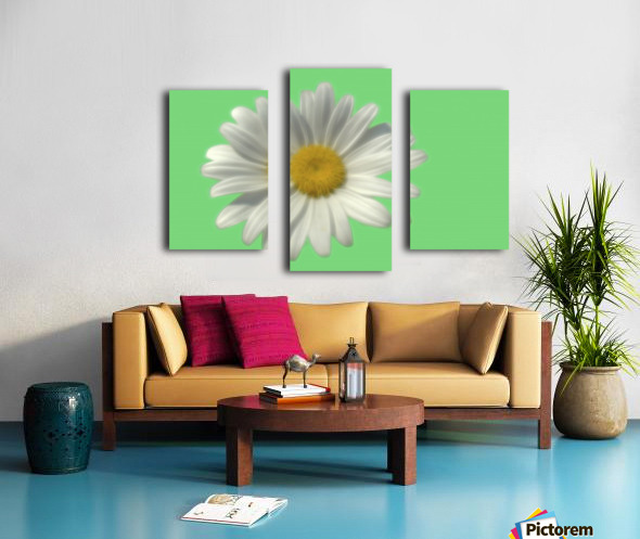 Soft bloom daisy Canvas print