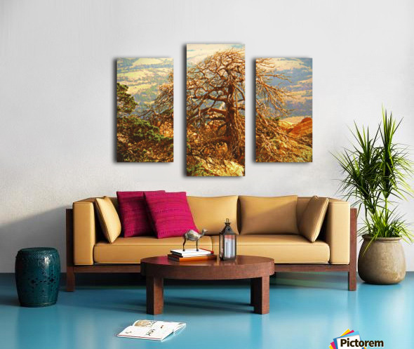 mtscotttreeone Canvas print