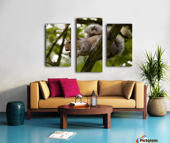 Gray Squirrel On A Tree Branch Canvas print