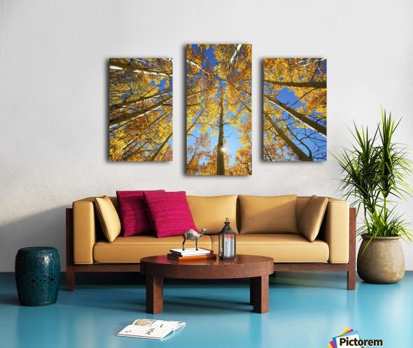 Colorado, Near Steamboat Springs, Buffalo Pass, Yellow Aspen Tree Canopy. Canvas print