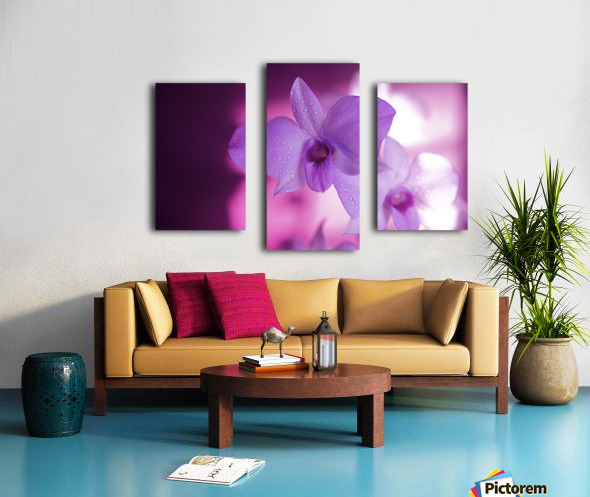 Hawaii, Kauai, White Orchid With Pink Lighting. Canvas print