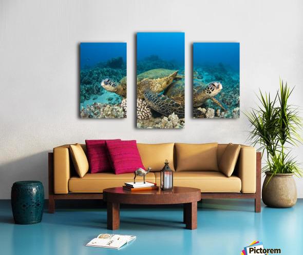 Hawaii, Green Sea Turtles (Chelonia Mydas) Over Coral Reef. Canvas print