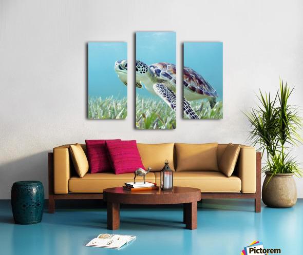 Hawaii, Green Sea Turtle (Chelonia Mydas) An Endangered Species. Canvas print