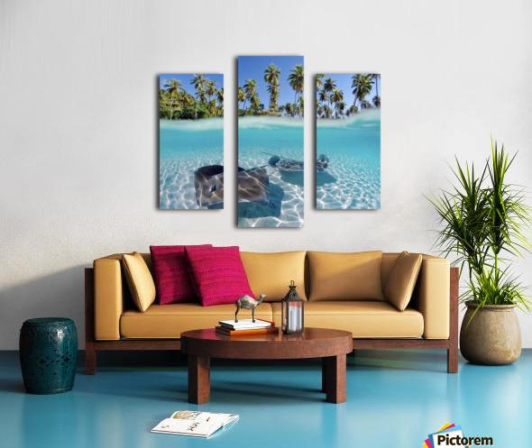 French Polynesia, Tahiti, Moorea, Two Stingray In Beautiful Turquoise Water. Canvas print