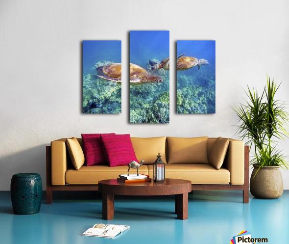 Hawaii, Two Green Sea Turtles, (Chelonia Mydas) An Endangered Species. Canvas print