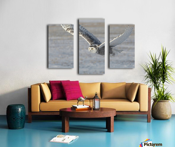 Snowy Owl in flight 6 Canvas print