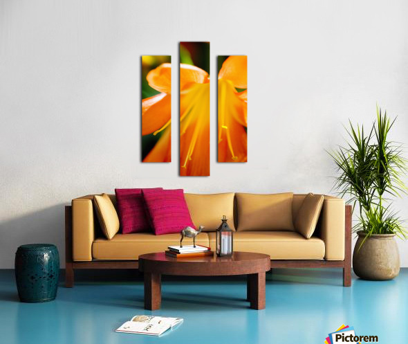 Extreme Close-Up Of Bright Orange Day Lily. Canvas print