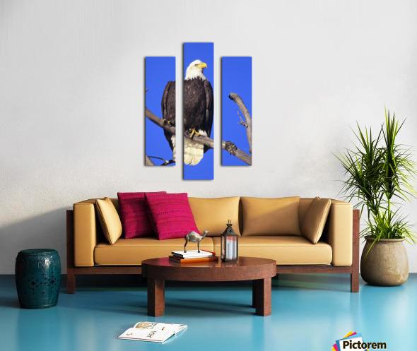 Alaska, Haines Bald Eagle Reserve, Bald Eagle (Haliaeetus Leucocephalus) Perched On A Branch. Canvas print