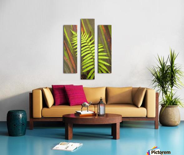 Hawaii, Maui, Hana, Fern And Rainbow Eucalyptus Tree. Canvas print