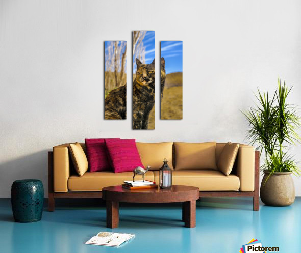 Adult Wild Cat Sitting and Watching Canvas print