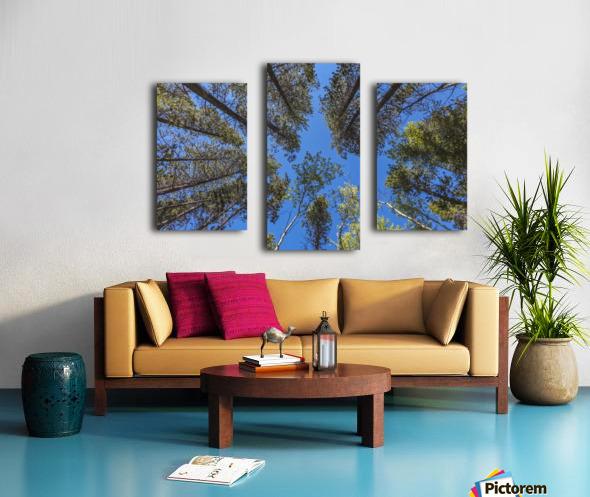 Tree Tops Near Grassi Lake Trail, Alberta Canvas print