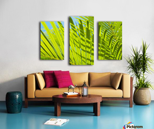 Close-Up Detail Of Light Green Palm Leaves With Shadow Pattern Against Blue Sky Canvas print