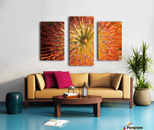 Close-Up Top View Red Pin Cushion Protea Blossom Or Leucospermum, Texture Detail Canvas print