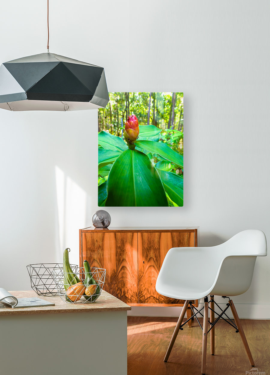 HDR Ants on a ginger flower  HD Metal print with Floating Frame on Back