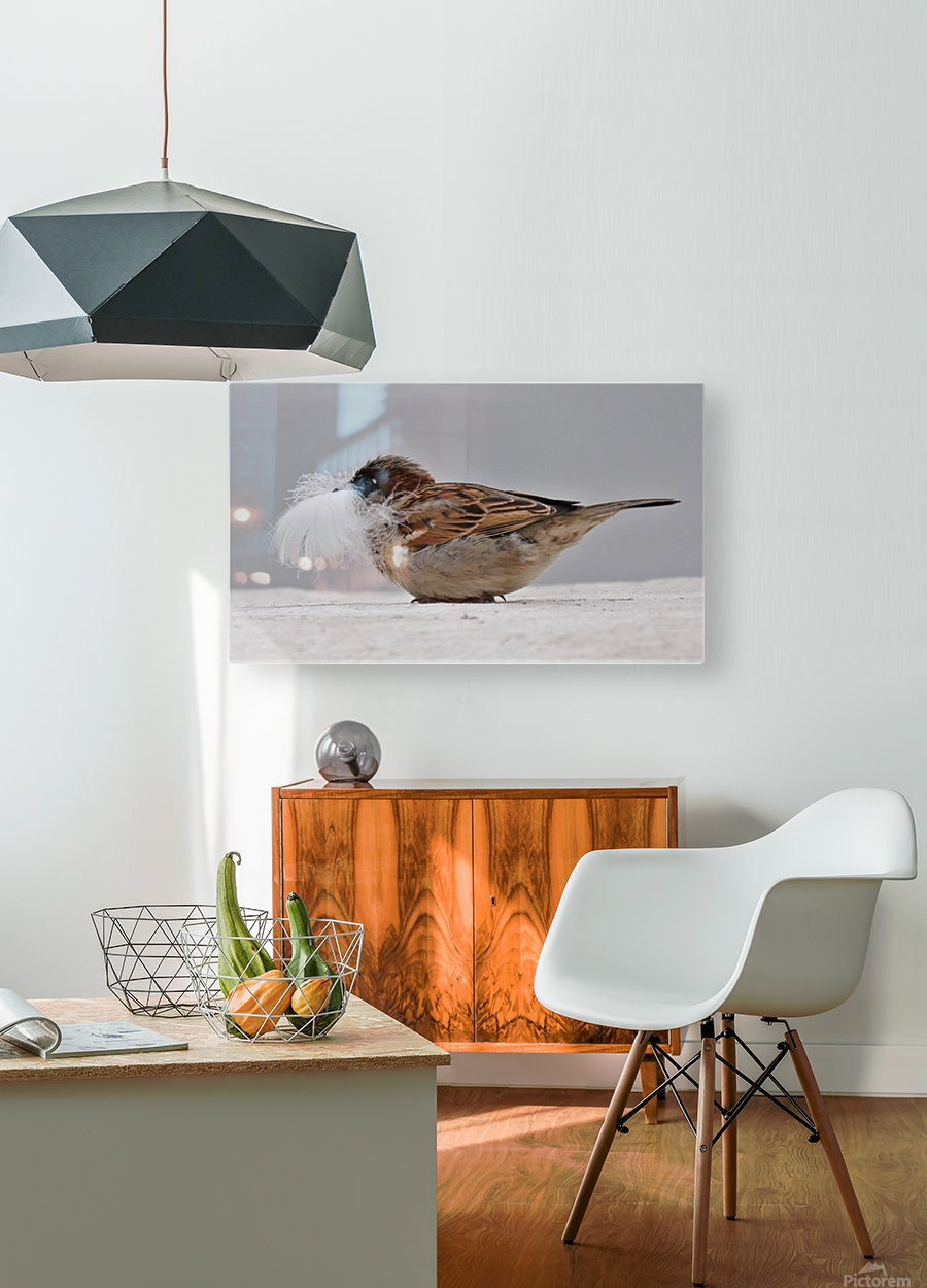 Feather face  HD Metal print with Floating Frame on Back