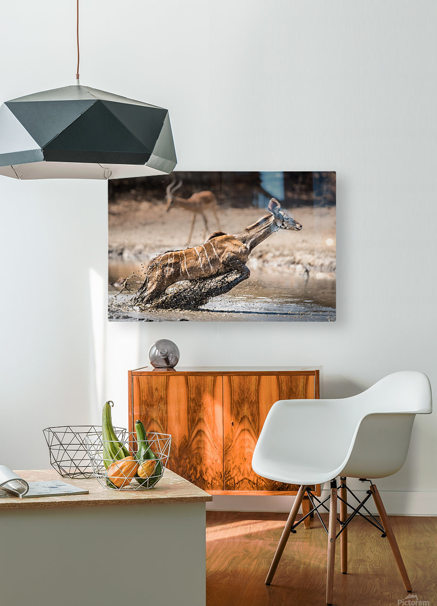 Kudu jump  HD Metal print with Floating Frame on Back