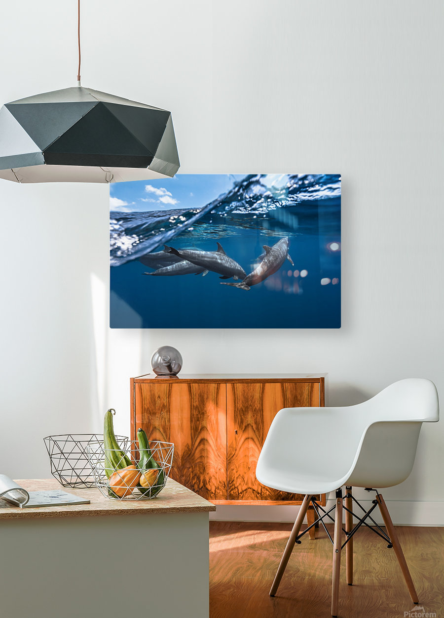 Dolphins  HD Metal print with Floating Frame on Back