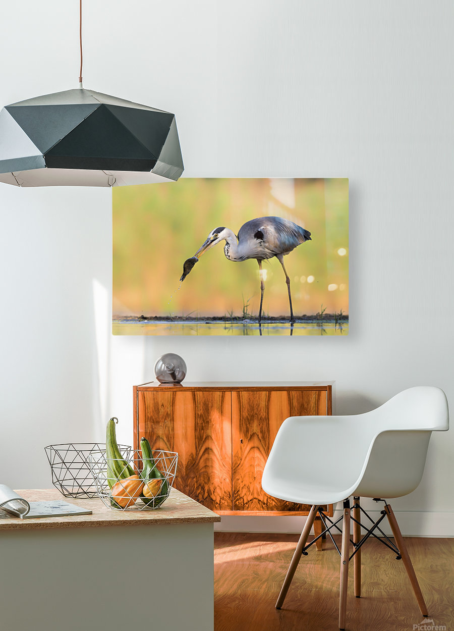 Morning Catch  HD Metal print with Floating Frame on Back