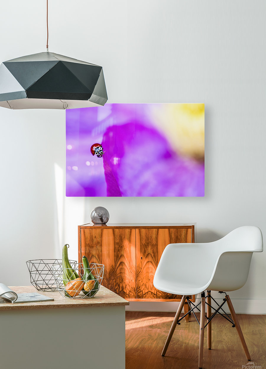 A ladybug on a pink clematis;British columbia canada  HD Metal print with Floating Frame on Back