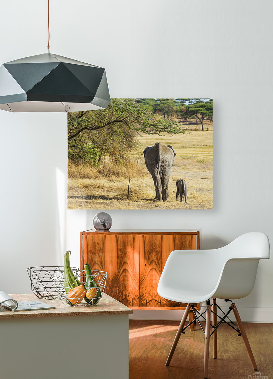 An African Elephant with it's young; Tanzania  HD Metal print with Floating Frame on Back