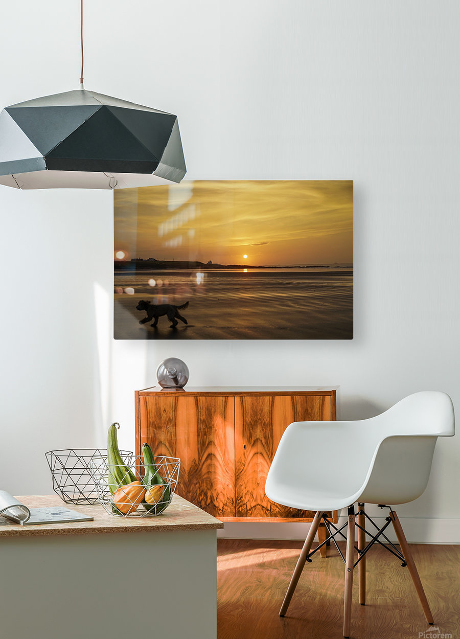 A dog runs across a wet beach with the golden sun setting in an orange sky along the coast and Bamburgh Castle in the distance; Bamburgh, Northumberland, England  HD Metal print with Floating Frame on Back