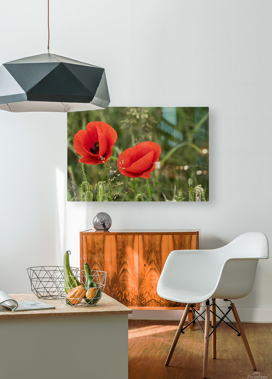 Close up of red poppies blossoming; South Shields, Tyne and Wear, England  HD Metal print with Floating Frame on Back