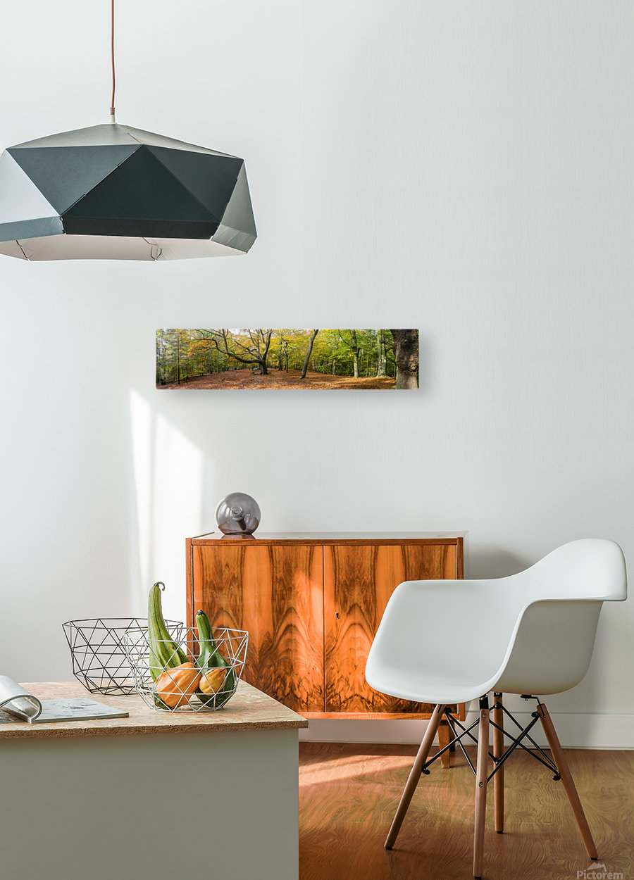 Panorama of a forest in autumn colours; Surrey, England  HD Metal print with Floating Frame on Back