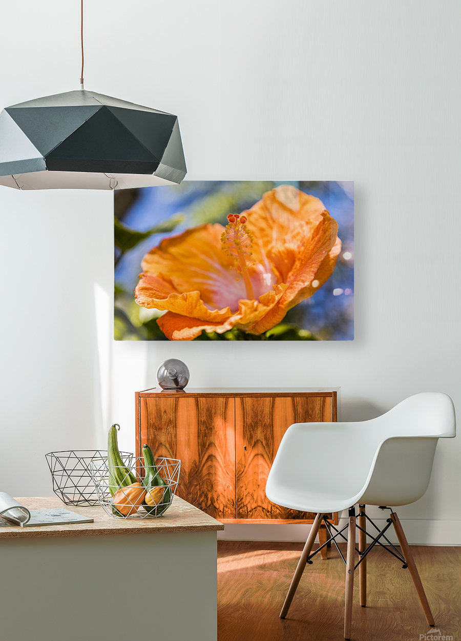 Close-up of orange hibiscus flower; Maui, Hawaii, United States of America  HD Metal print with Floating Frame on Back