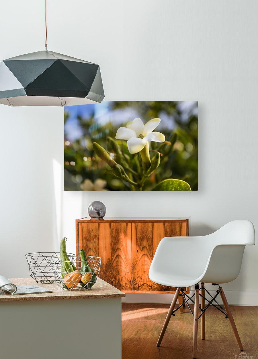 Close-up of puakenikeni flower; Lanai, Hawaii, United States of America  HD Metal print with Floating Frame on Back