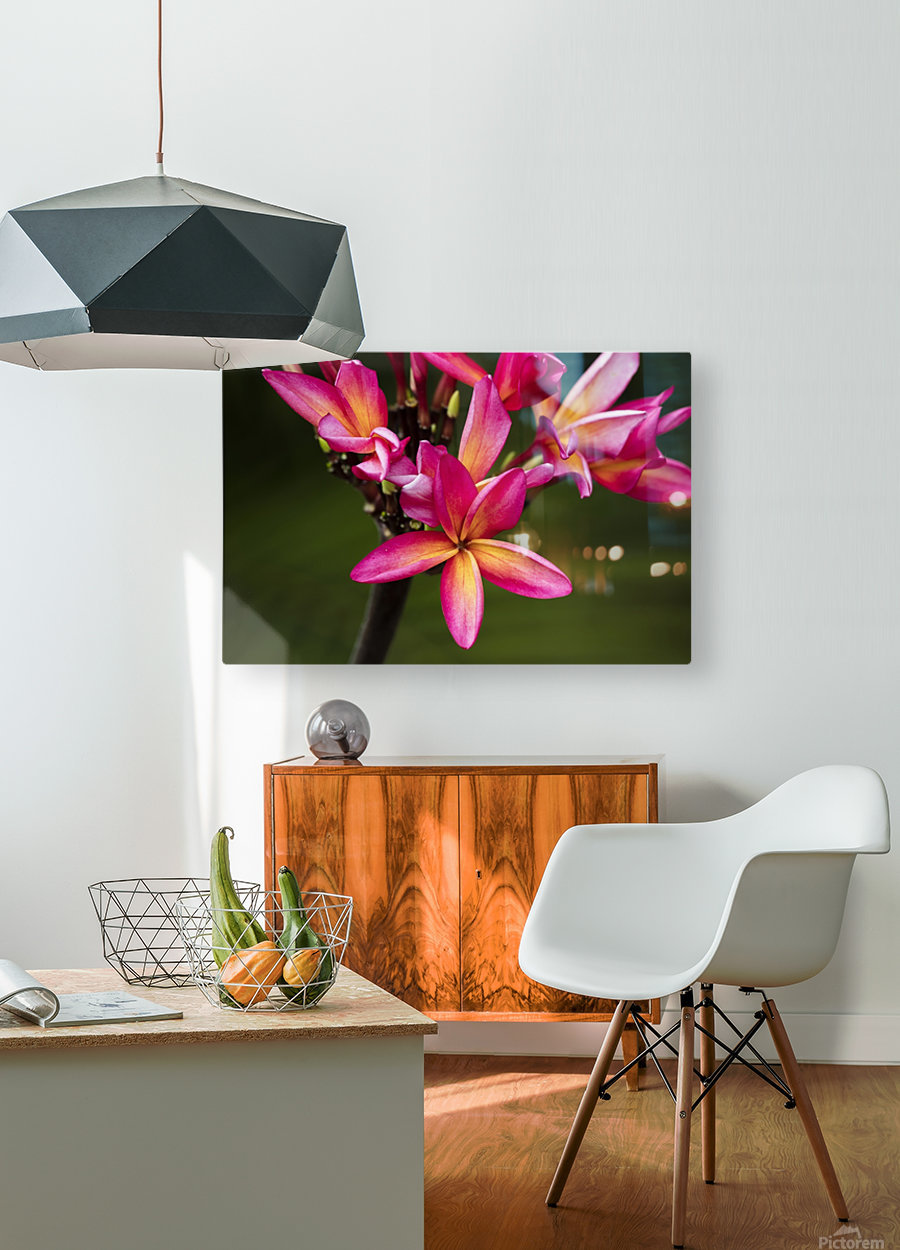 Close-up of bright pink plumeria flowers; Maui, Hawaii, United States of America  HD Metal print with Floating Frame on Back