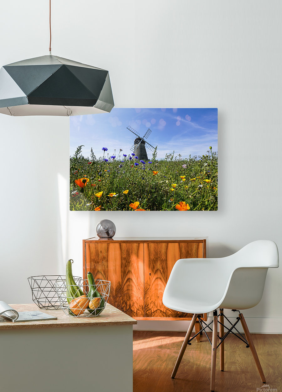 A windmill against a blue sky and cloud with a field of wildflowers in the foreground; Whitburn, Tyne and Wear, England  HD Metal print with Floating Frame on Back