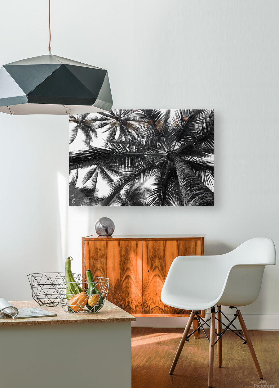 Low angle view of coconut palm trees in black and white; Honolulu, Oahu, Hawaii, United States of America  HD Metal print with Floating Frame on Back
