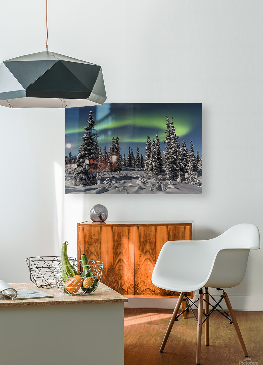 Green Aurora Borealis dances over the tops of snow covered black spruce trees, moonlight casting shadows on a clear winter night, interior Alaska; Gakona, Alaska, United States of America  HD Metal print with Floating Frame on Back