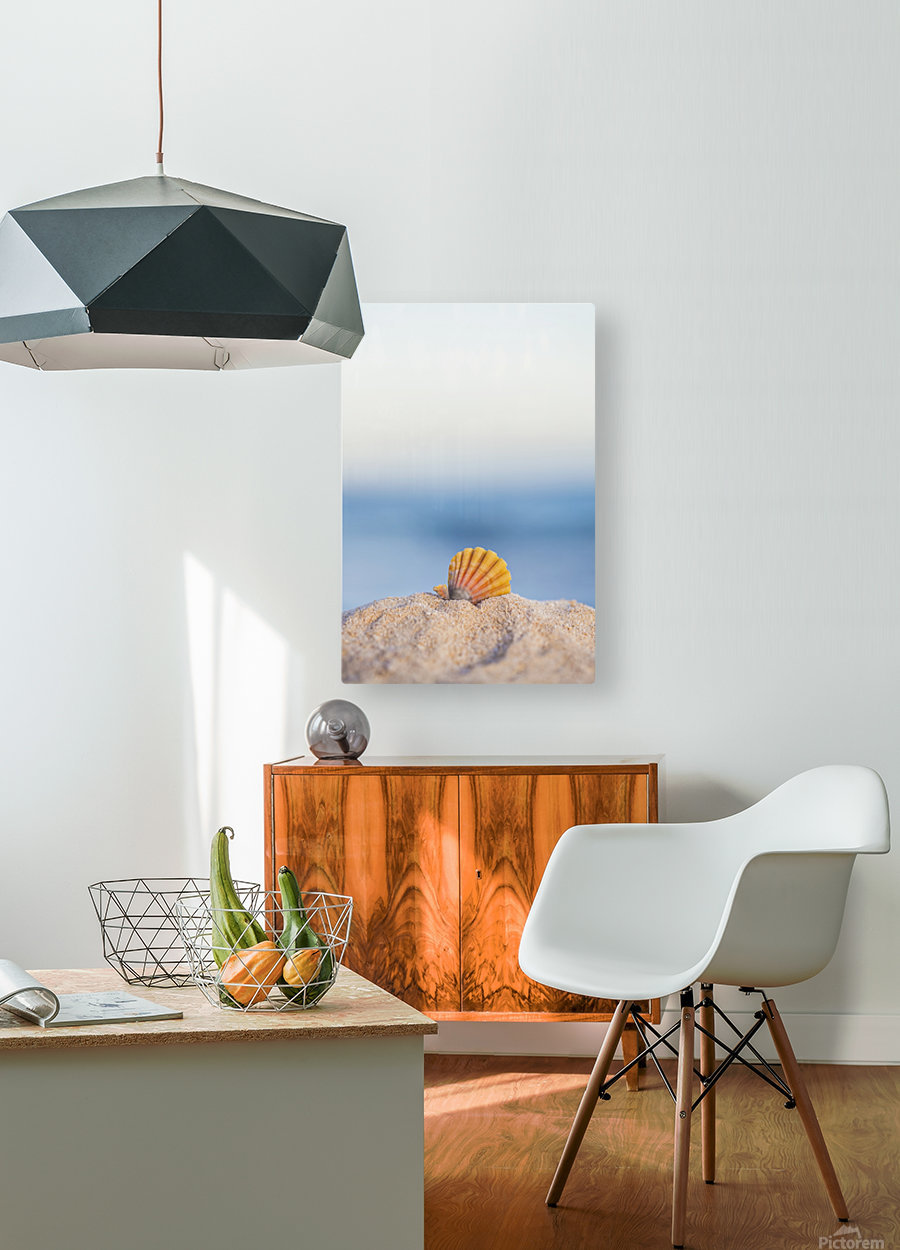 A rare rainbow color Hawaiian Sunrise Scallop Seashell, also known as Pecten Langfordi, in the sand at the beach at sunrise; Honolulu, Oahu Hawaii, United States of America  HD Metal print with Floating Frame on Back