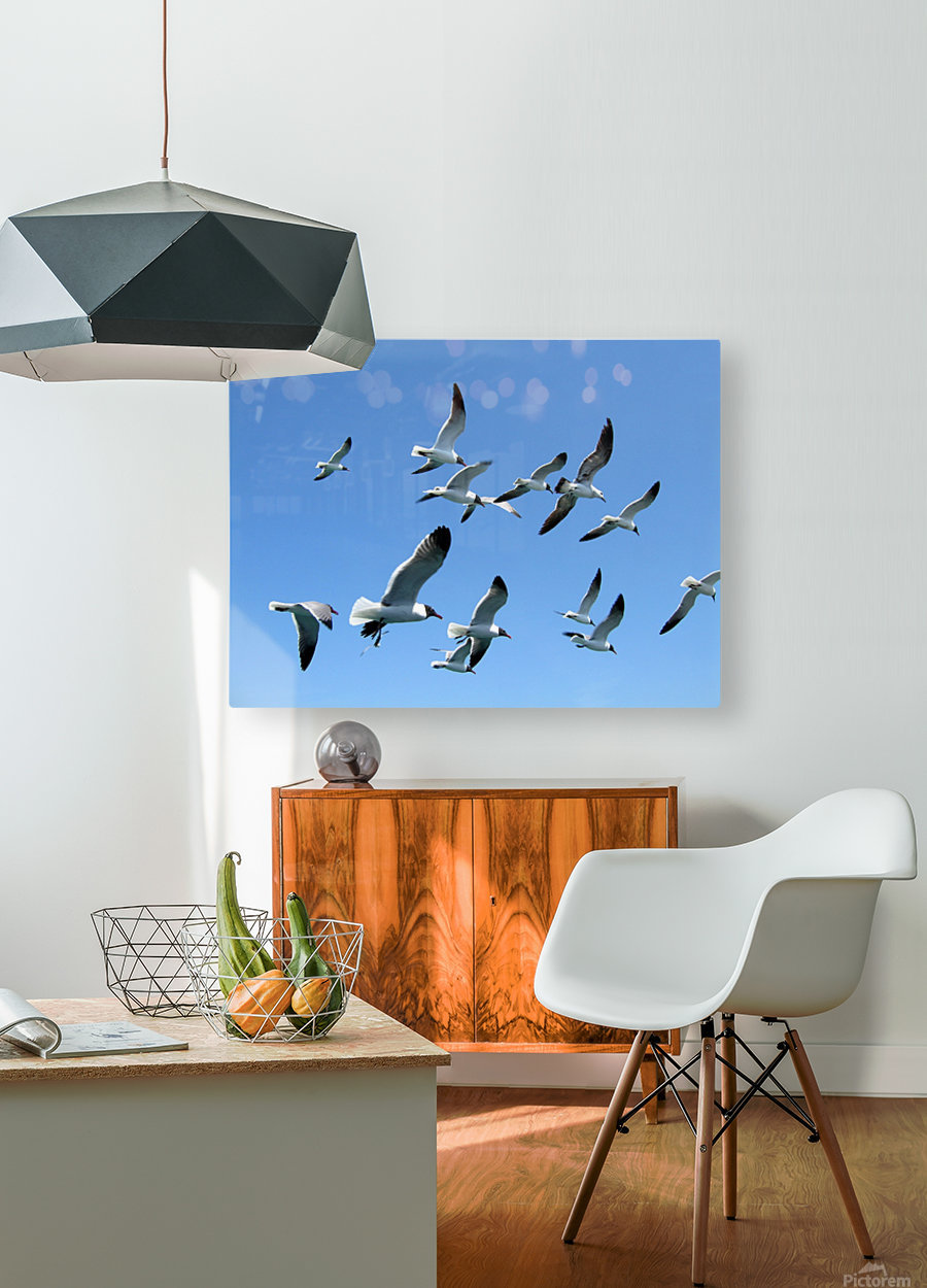 Seagulls against a clear blue sky  HD Metal print with Floating Frame on Back