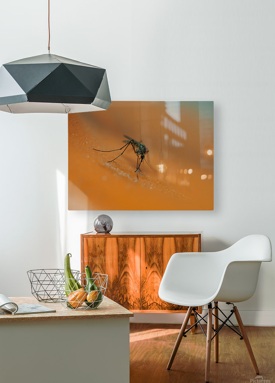 Mosquito!  HD Metal print with Floating Frame on Back