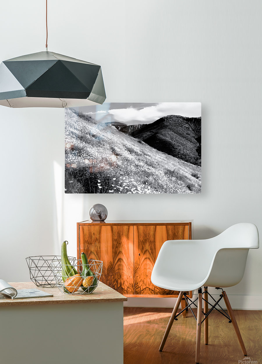 poppy flower field with mountain and cloudy sky background in black and white  HD Metal print with Floating Frame on Back