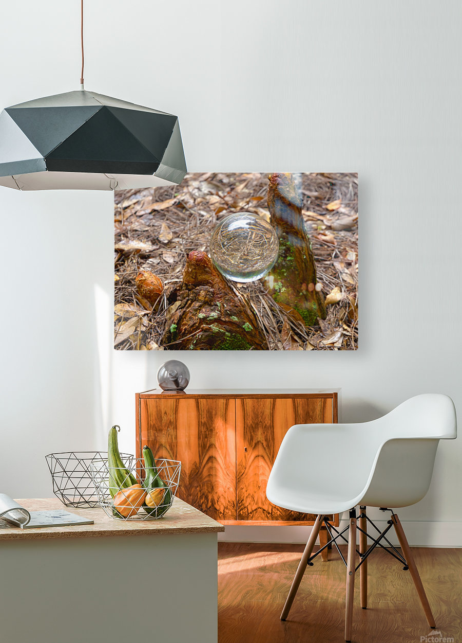 HDR CRYSTAL BALL BETWEEN TWO CYPRESS KNEES  HD Metal print with Floating Frame on Back