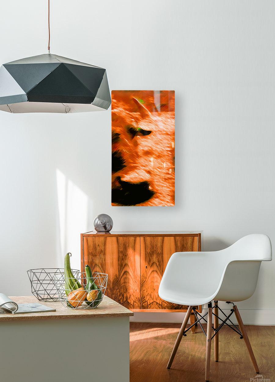Büffeln  HD Metal print with Floating Frame on Back