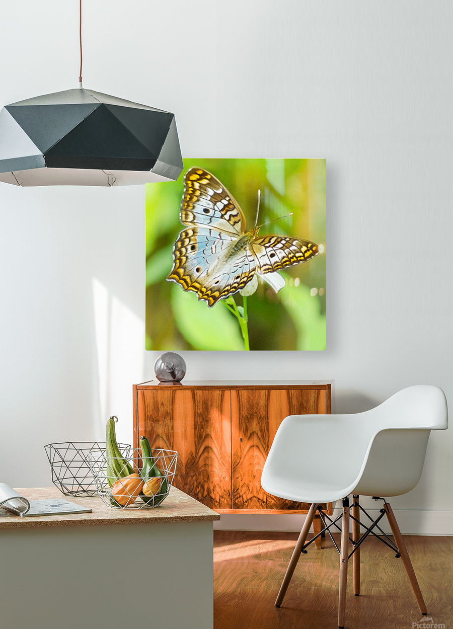 Psychedelic White Peacock Butterfly  HD Metal print with Floating Frame on Back