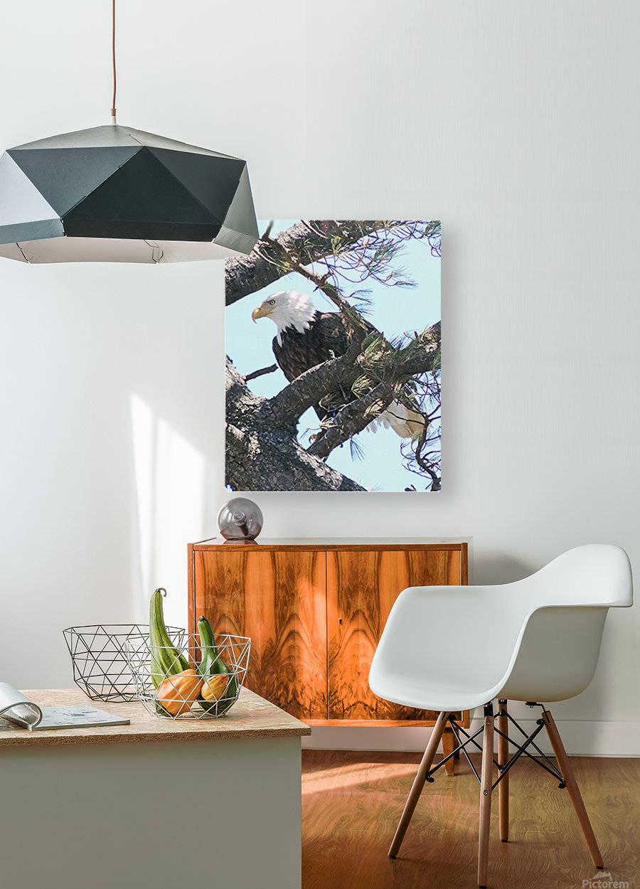 Watchful  HD Metal print with Floating Frame on Back