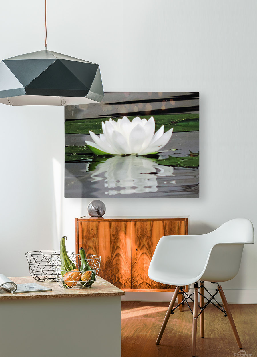 FloweringLilyPad  HD Metal print with Floating Frame on Back