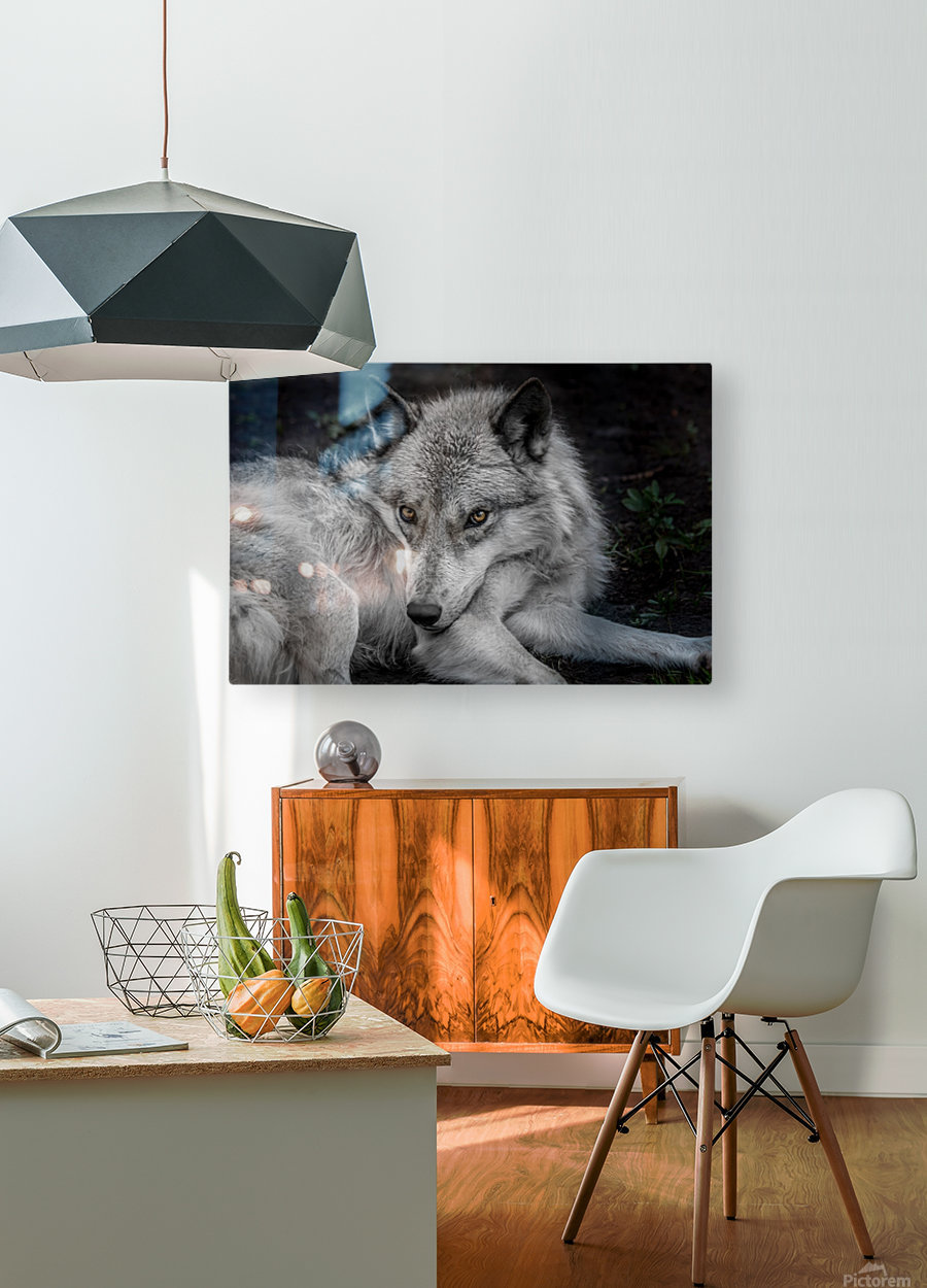 WolfDog  HD Metal print with Floating Frame on Back