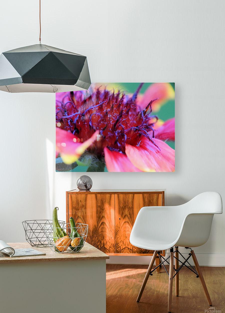 Sun Flower Macro  HD Metal print with Floating Frame on Back