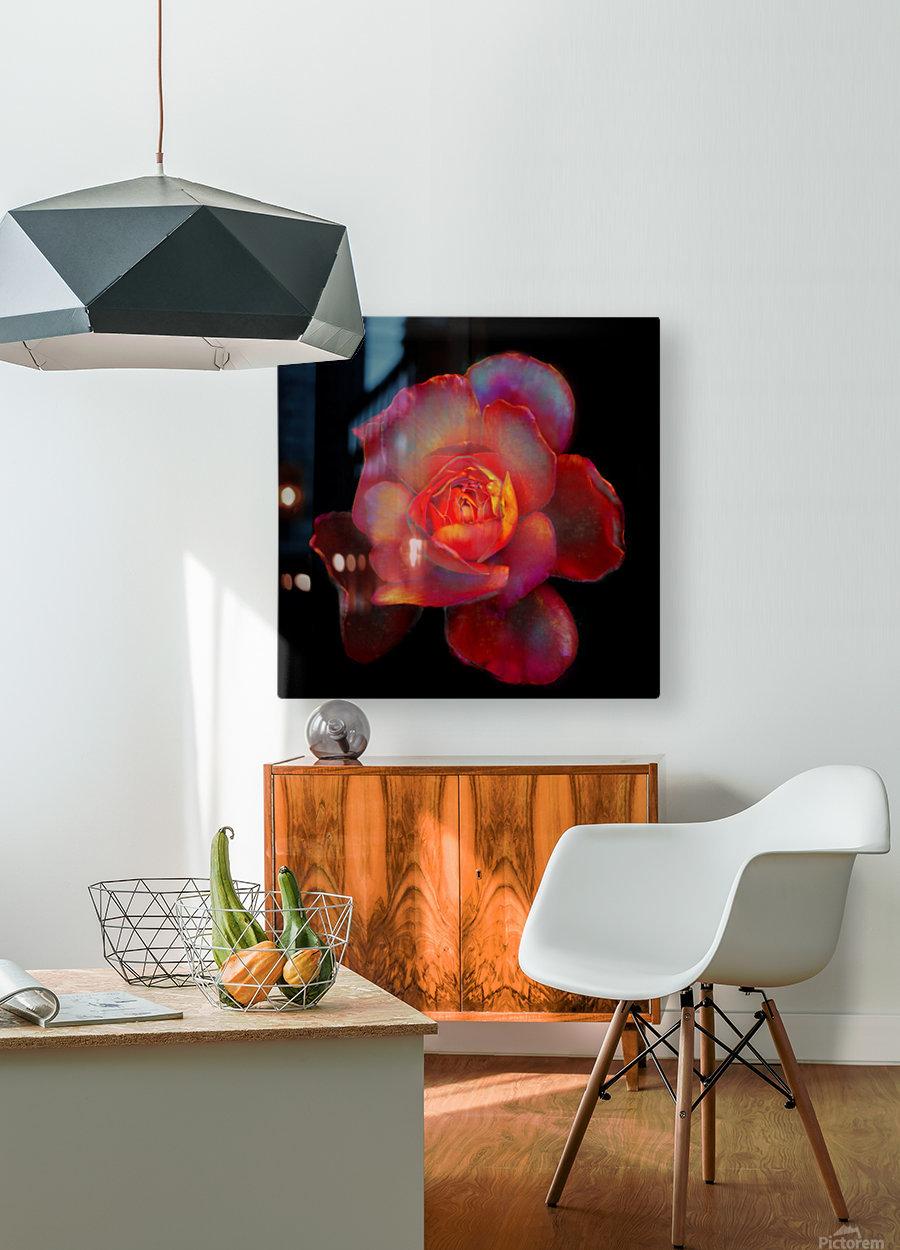 Gilded Rose  HD Metal print with Floating Frame on Back