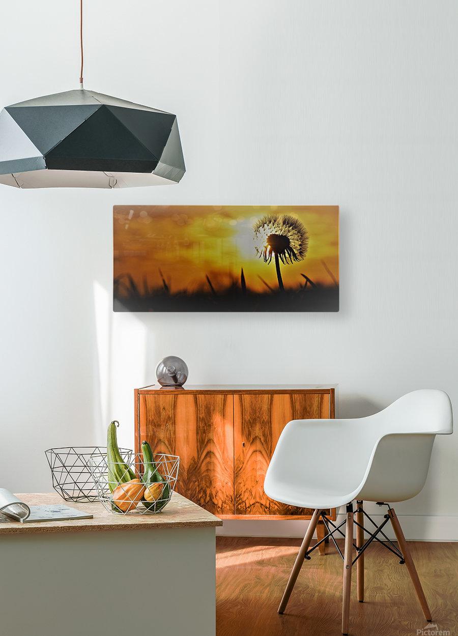 Dandelion  HD Metal print with Floating Frame on Back