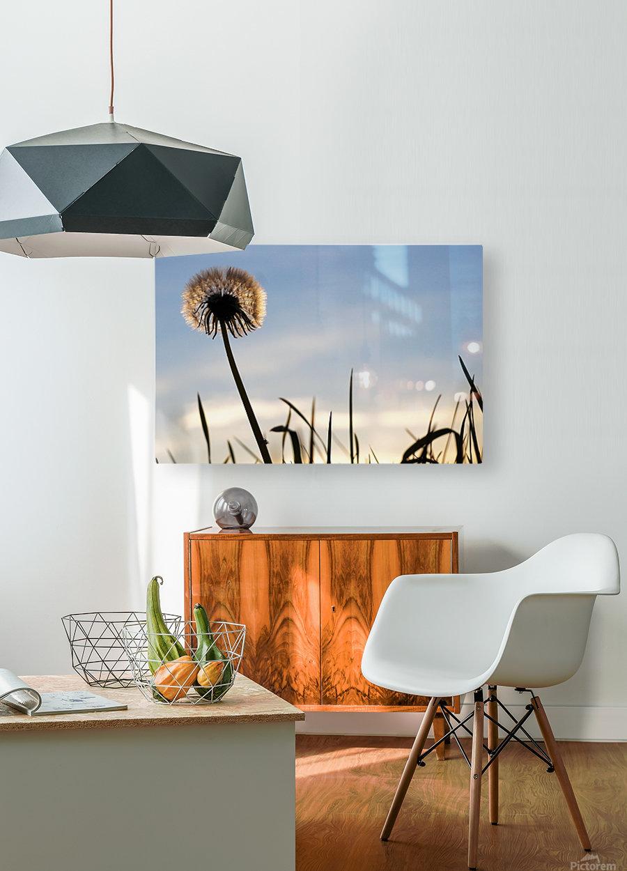 Dandelion  Impression métal HD avec cadre flottant sur le dos